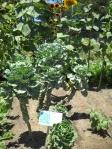 Broccoli-Spinach