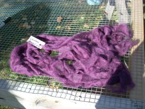 bright purple roving