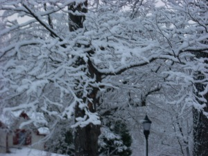 Snow tree closeup